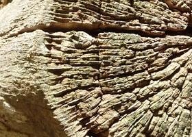 Eiche-Altholz-Baumstumpf